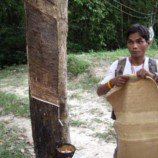 India: Domestic natural rubber price on October 8, 2013